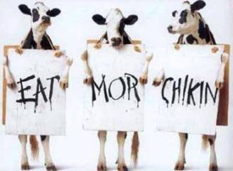 Mad Cows Eat Chicken