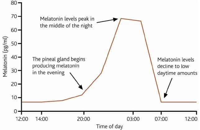 Melatonin production peaks at night