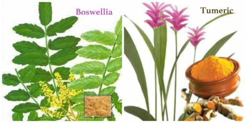 Curcumin and Boswellia Botanicals