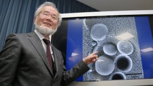 Dr. Yoshinori Ohsumi discovered the importance of cellular autophagy.