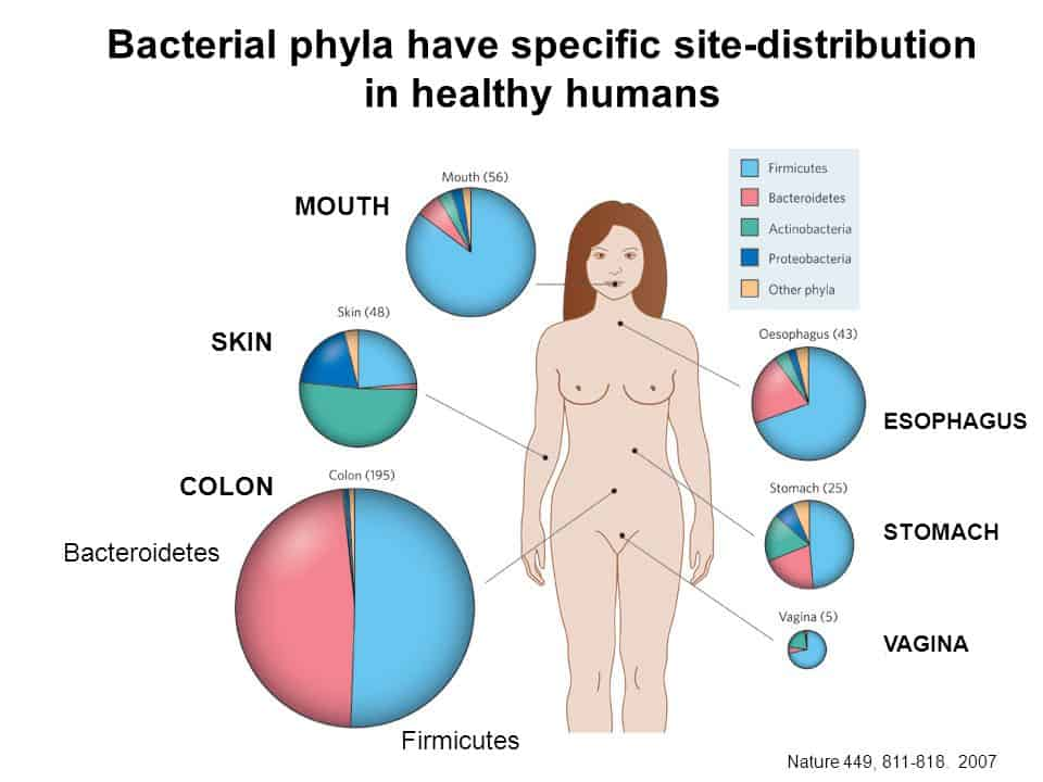 bacterial sites on and in the human body