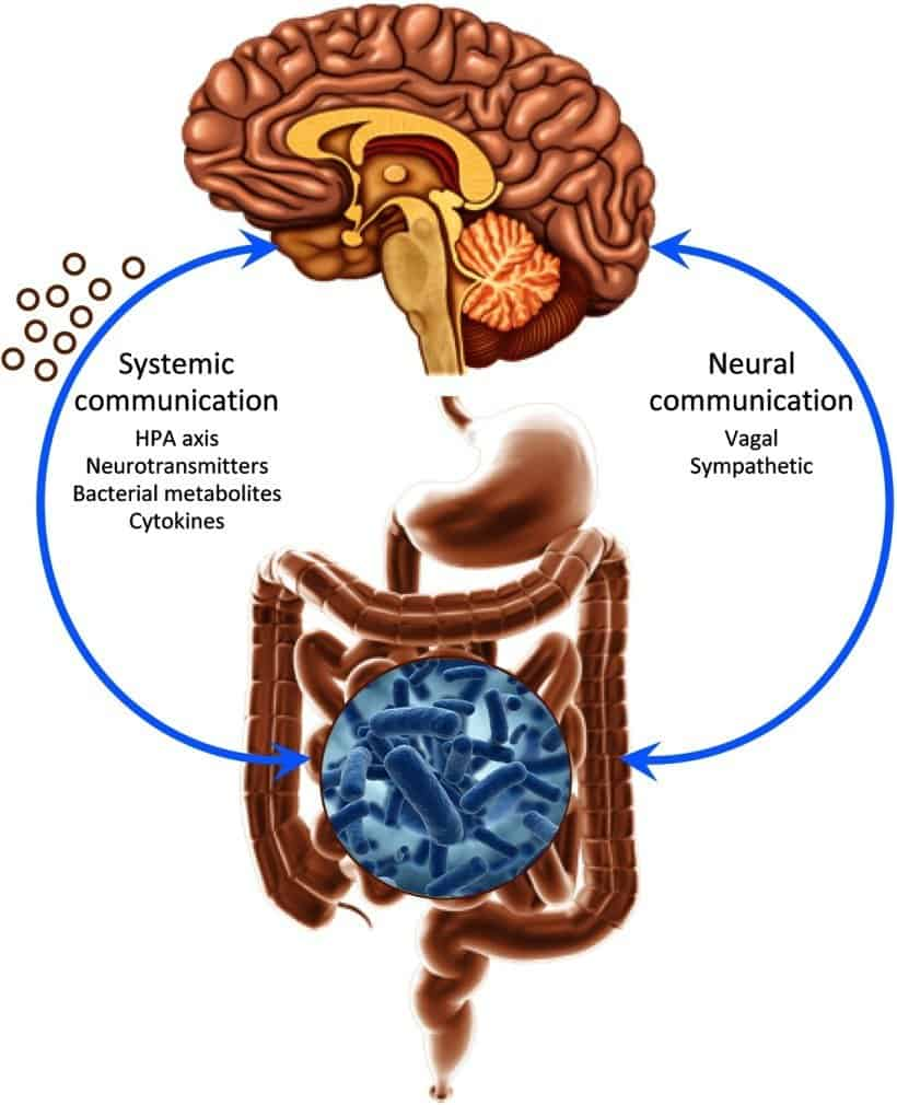 Gut Brain Connection >> Gut Brain Connection Garma On Health