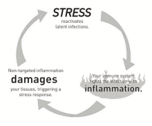 chronic stress and inflammation
