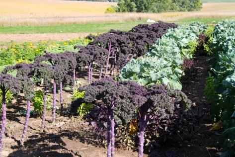 Kale & Romanesco