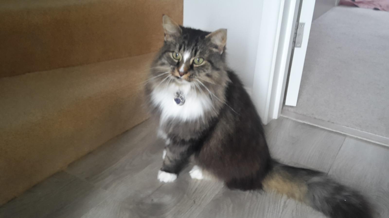 Julies new cat Murphy