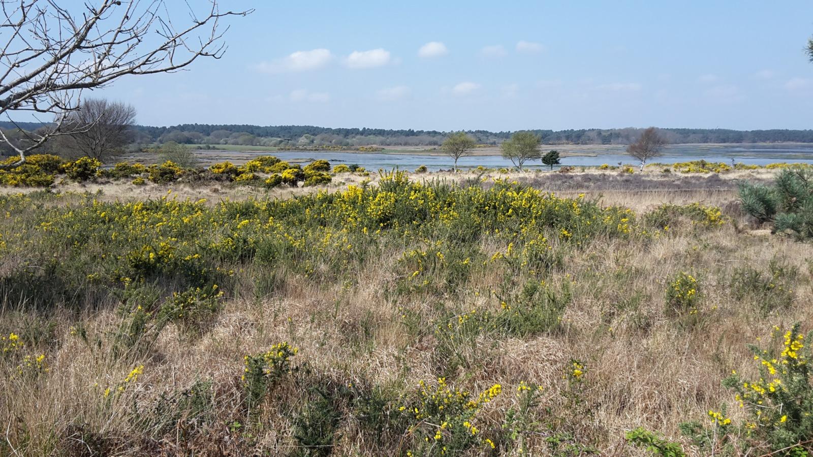Heathland on Purbeck