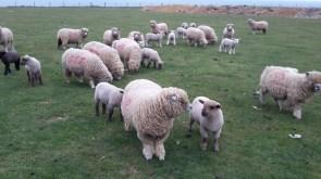 Grange farm Brighstone