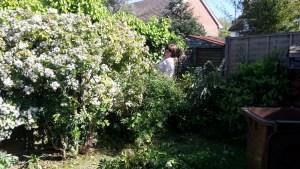 Garry's garden