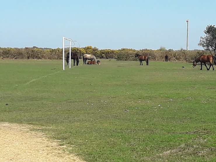 Horses on a football pitch