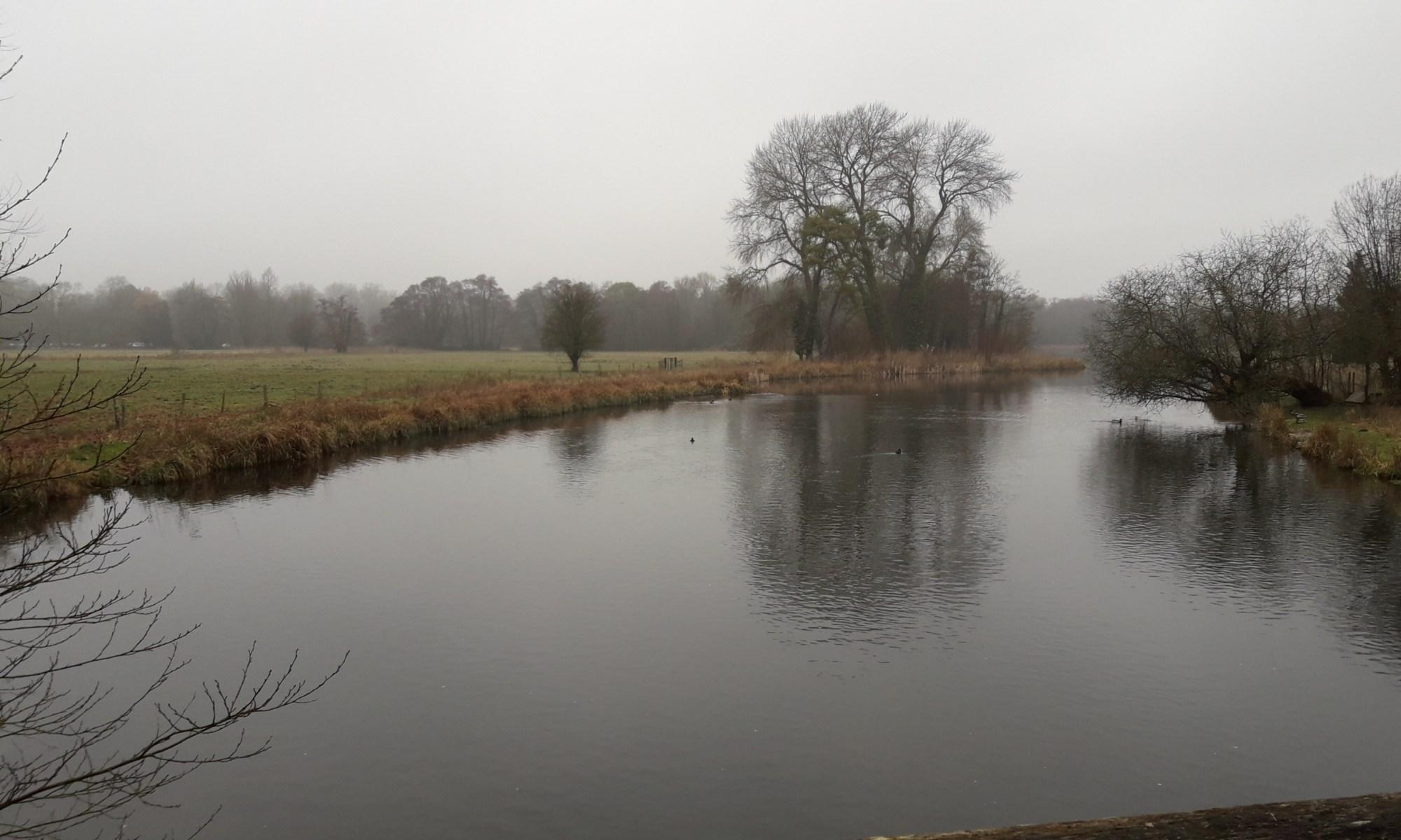 Field tree river
