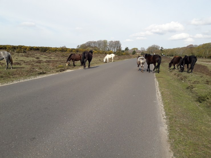Road ponies and gorse