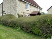 House ducks hedge