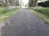 Grass on path