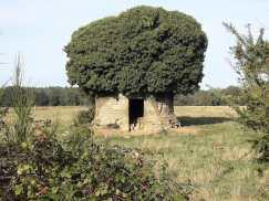 It's a tree castle!