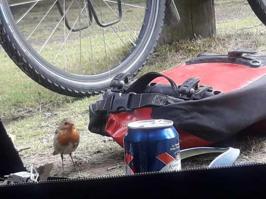 Wheel beer robin