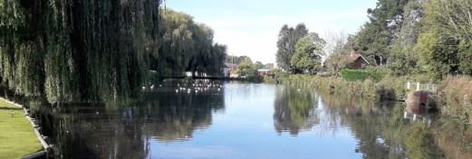 Pond with trees around