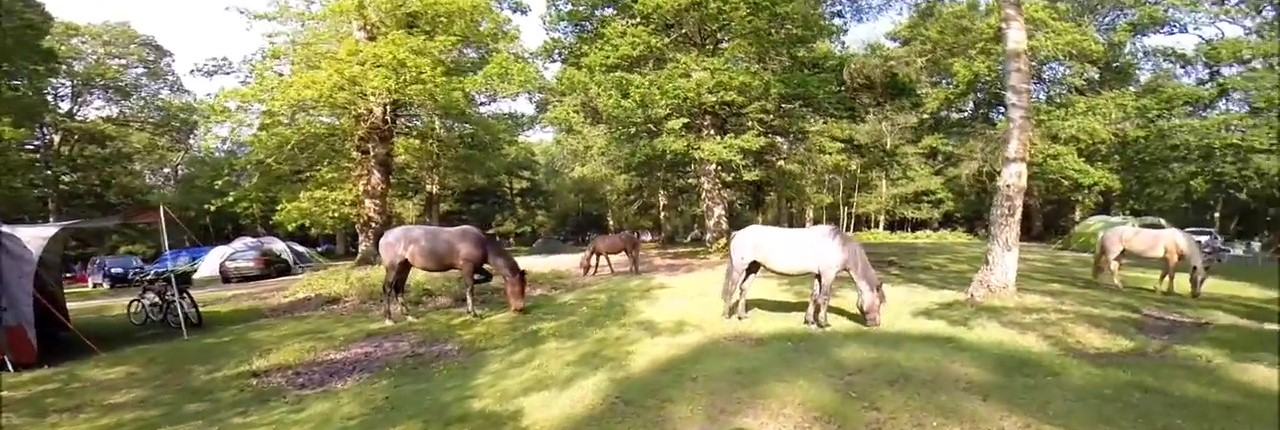 Ponies in the forest