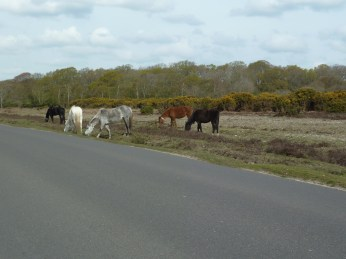 Ponies in the road