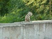 Chipmunk Garry kept seeing plenty of these little fellows