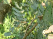 Spider in the woods coming out of Gorakhpur, Uttar Pradesh