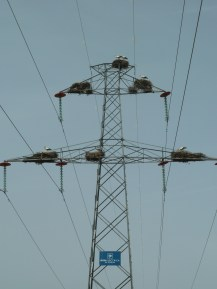 Storks nesting on a pylon