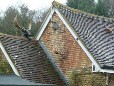 Deer on a roof