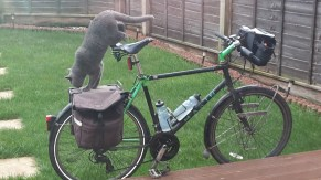 British Blue cat on a bike