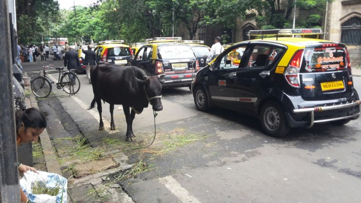 Cow on the street in Mumbai