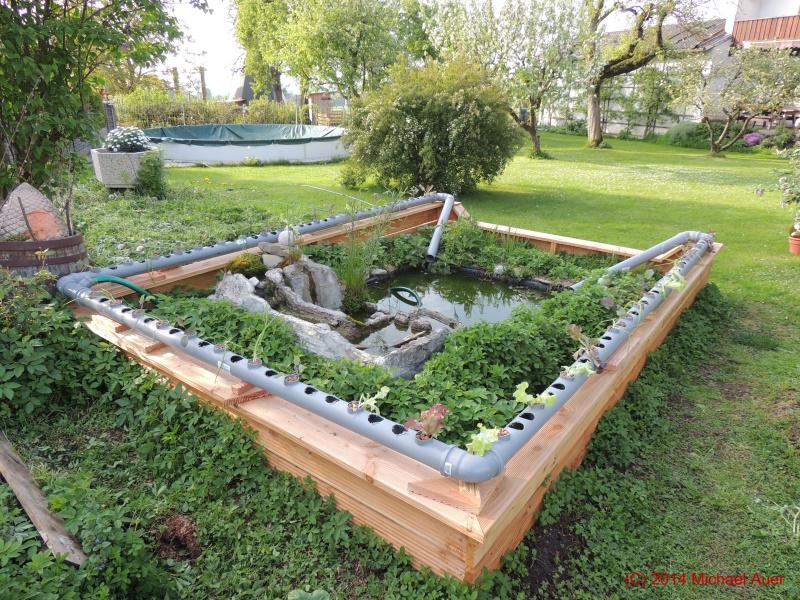 Aquaponic Anlage im Garten