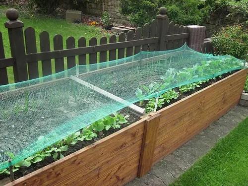 salbei pflege richtig pflanzen schneiden und berwintern. Black Bedroom Furniture Sets. Home Design Ideas