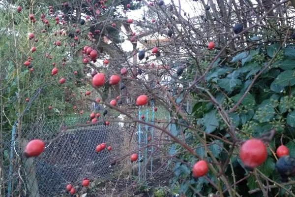 Gartenarbeit Im Januar Und Februar Tipps Für Den Winter