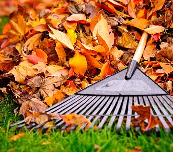 Tipps für das Herbstlaub