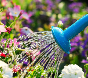 Ratgeber zum Gießen im Garten