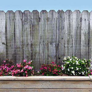 Pflanzen für den sommerlichen Garten