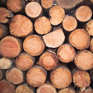 Das richtige Feuerholz