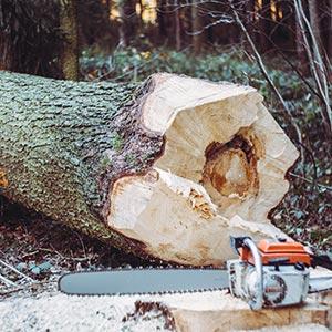 Gartenpflege-Tipp: Baumschnitt und Baumfällung besser vom Profi