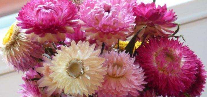 Blumen Trocknen Ohne Farbverlust Blumen Pressen Der Kreative  17  Nice Blumen Trocknen Images