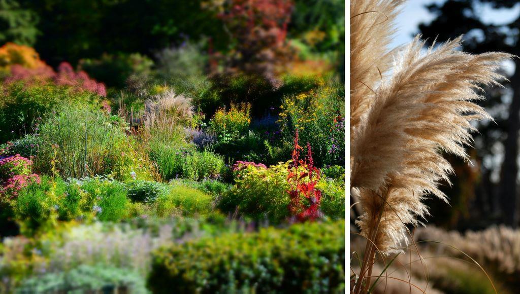 Stauden – Angenehme Farbtupfer Im Garten Garten Pflanzen