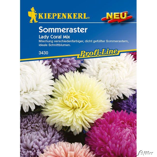 Aster 'Lady Coral Mix'