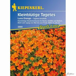 Tagetes 'Luna Orange'