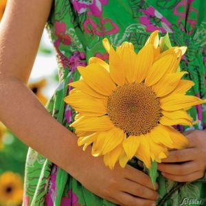 Hecken-Sonnenblume 'Golden Hedge'