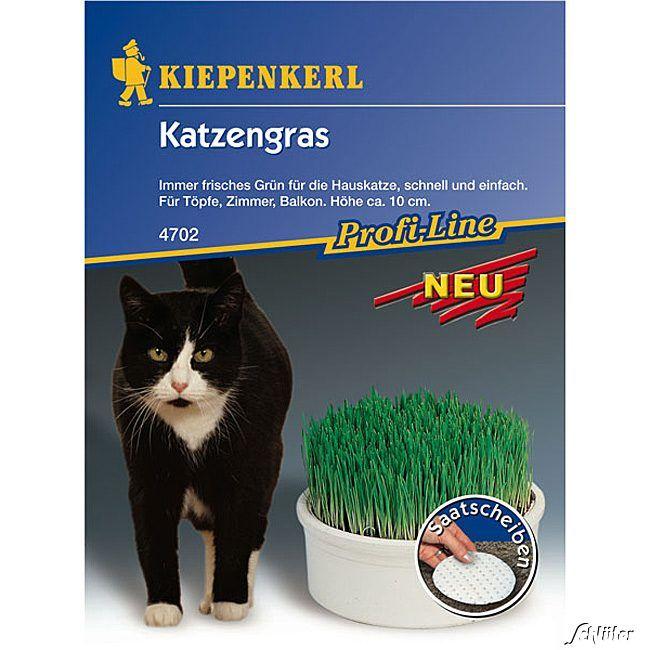 Katzengras - Saatscheiben