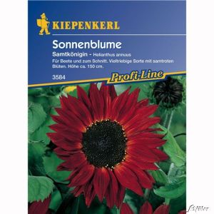 Sonnenblume 'Samtkönigin'