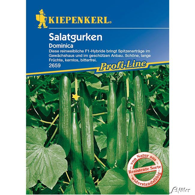 Salatgurke 'Dominica'