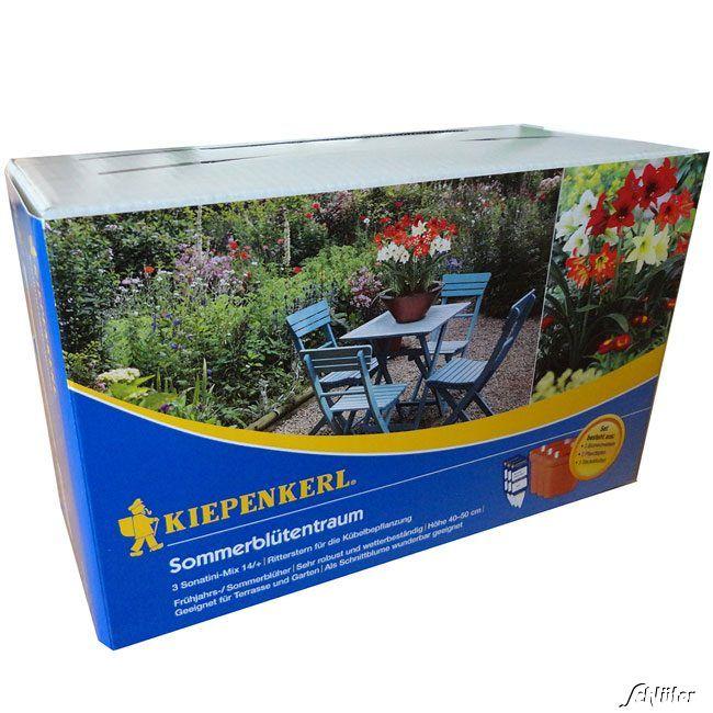 Gartenamaryllis Farbenmischung