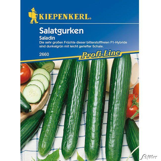 Salatgurke 'Saladin'