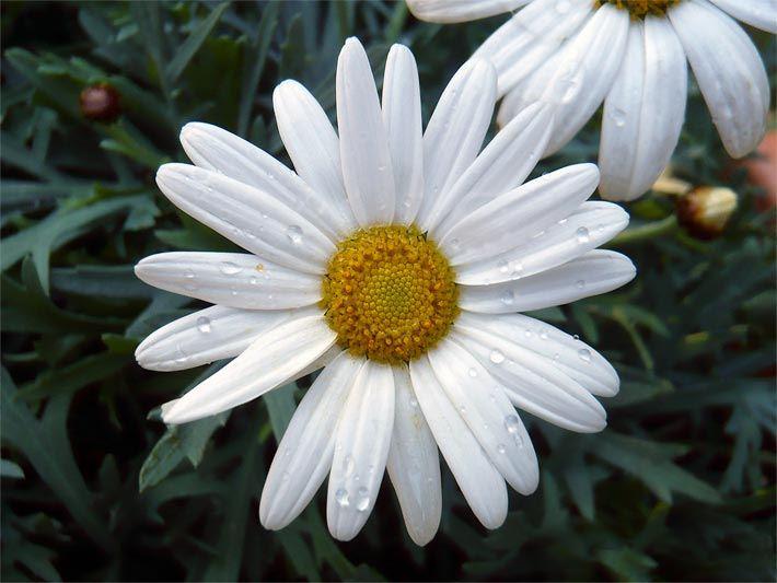 Weie Blumenarten Simple Clip Art Weisse Blumen In