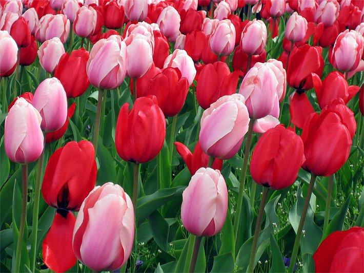 Blumen  Blumenlexikon und Blumenkatalog