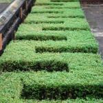 pflanzentiere-06-hue