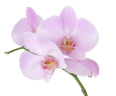 Orchideen Bedeutung orchidee ihre bedeutung in der blumensprache orchideen aussehen herkunft